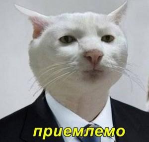 Создать мем: мемы, котики, кошка