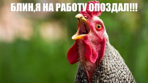 Create meme: rooster in profile, chicken , the rooster crows