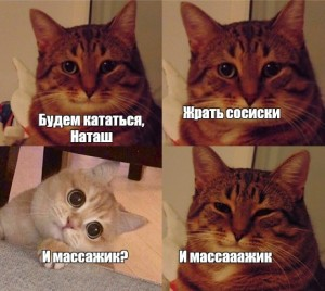 Create meme: the meme with the cat and the cat, memes with cats , cat