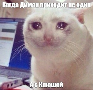 Создать мем: serious cat, crying cat, мем кот плачет