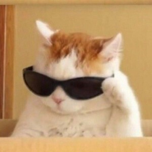 Create meme: Cat , memes with cats , cool cat meme