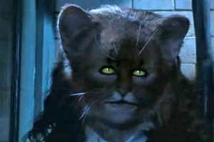 Create meme: the owner , harry potter and the chamber of secrets , cat transformation