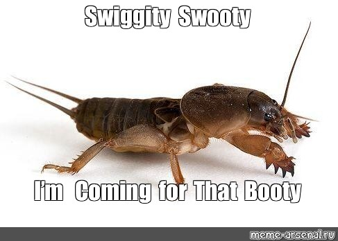 Meme Swiggity Swooty I M Coming For That Booty All Templates Meme Arsenal Com Submitted 3 years ago by xxbghytxx. meme swiggity swooty i m coming for