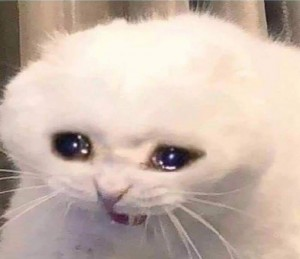 Create meme: crying cat , cat , cry cat meme