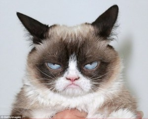 Create meme: Unhappy cat