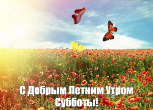 Create meme: poppy meadow, poppy flower, red poppy