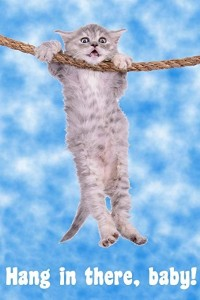 Create meme: cat hanging on a rope picture, poster cat hang on, kitty hang in there