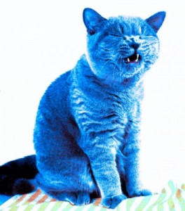 Create meme: Blue cat