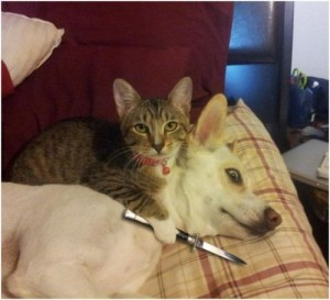 Create meme: funny pictures , dog , cat