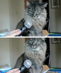 Create meme: risovac , microphone , where did the cat