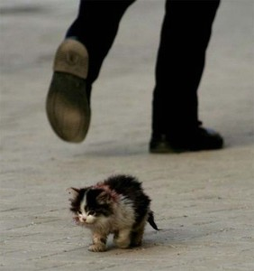 Create meme: homeless animal photo to tears, abandoned angry kitty photo, I will survive pictures