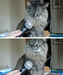 Create meme: comics cats , you realize that you are a cat, cat with microphone