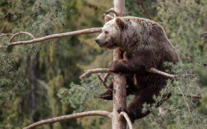 Create meme: Bear on the tree