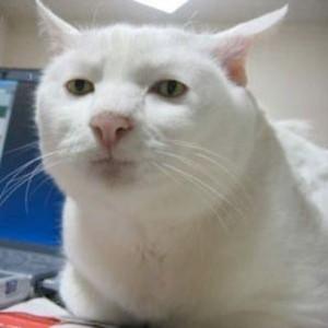 Создать мем: плачущий кот мем, Кошка, кот мем