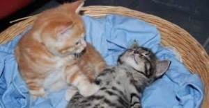Create meme: kitties , the cat woke up, cat