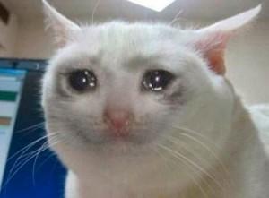 Создать мем: Несчастный кот 2