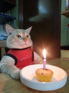 Create meme: funny pics with cats happy birthday, pictures birthday cat funny, happy birthday cat photo