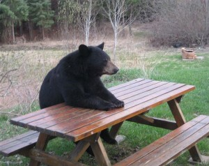 Создать мем: bear, медведь, picnic table