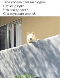 Create meme: dog osuzhdala, doge meme , dog meme