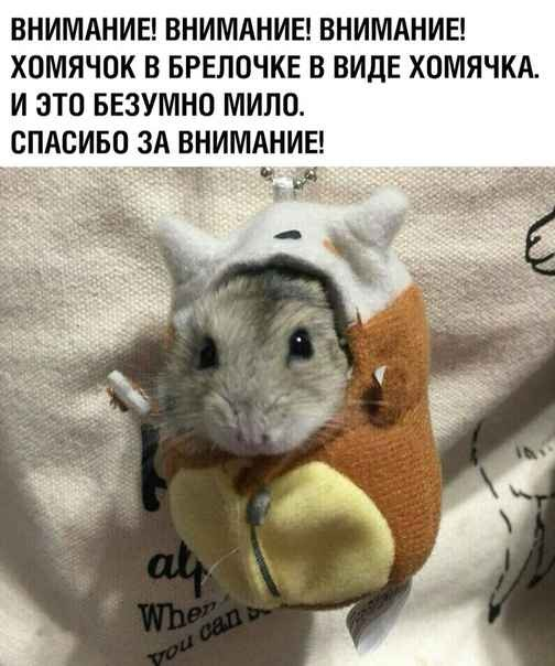 Create Meme Hamster House Pet Funny Hamsters Pictures