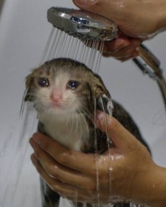 Create meme: cats , sad cat meme with tears, Animal