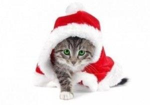 Create meme: funny Christmas cat, cat background, new year happiness