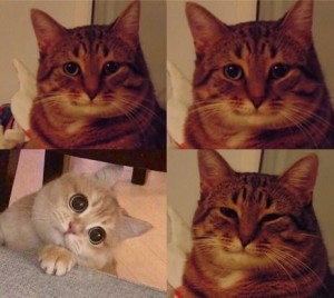 Create meme: cat meme , cats , cat