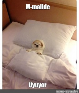 Create meme: dog in bed, the dog is sleeping in bed, dog in bed meme