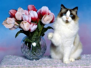 Create meme: Cat with flowers