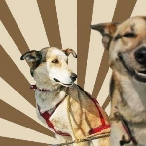 Создать мем: Stoner dogs concerned friend, funny dog, dog smile