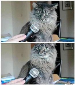 Создать мем: вы осознаете что вы кот, Кошка, кошечка