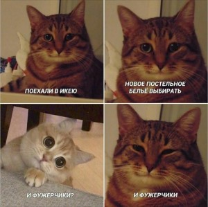 Create meme: and Fogerty meme with a cat, memes with cats , cat