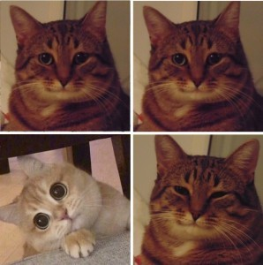 Create meme: meme cat , memes with cats , meme cat