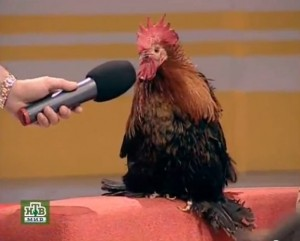 Create meme: microphone , cock with microphone, turnichki cock