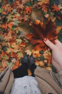 Создать мем: tumblr autumn leaf, autumn leaves, осень листья тумблер