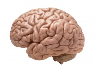 Create meme: brains brains, colored brain picture png, the human brain png