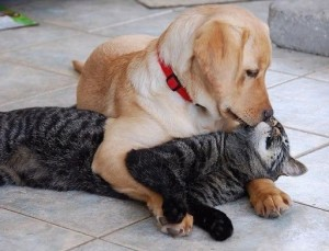 Create meme: dog and cat , cat and dog , cat and dog hug