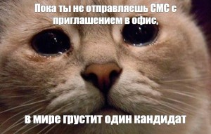 Create meme: sad cats memes, does this mean the cat , weeping cats