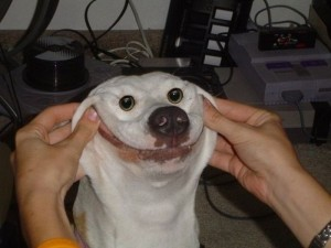 Create meme: the most ridiculous photo fun to tears, very very funny dog, smiling dog meme