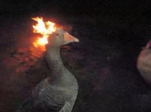 Create meme: goose meme, girl on fire, Boris the goose repair