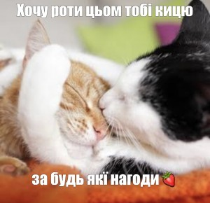 Create meme: kitten love photo, cat hugs cat, the cat and the cat love photo