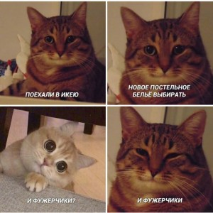Create meme: funny cats , cat , memes with cats