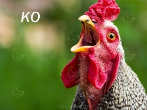 Create meme: the cock bird, cock mad, rooster in profile
