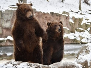 Create meme: brown bear , brown bear , brother bear