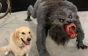 Create meme: werewolf , dog and werewolf meme, dog
