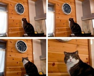 Create meme: cat cat , cats , meme with a cat and a clock