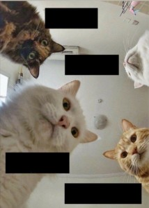 Create meme: meme cats we all dropped, humor , meme cats get up