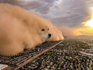 Создать мем: doge cloud meme, dog, dog meme