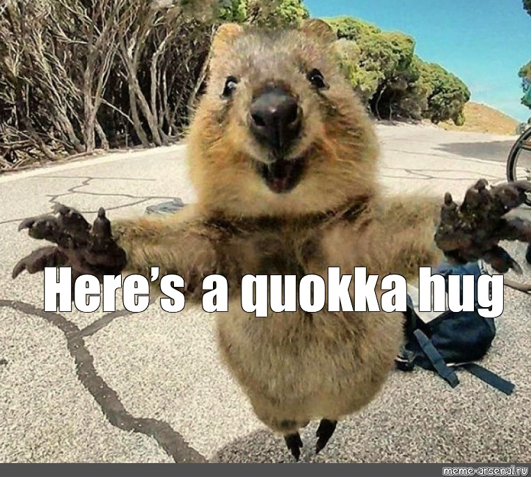 "Meme: ""Here's a quokka hug"" - All Templates - Meme-arsenal.com"