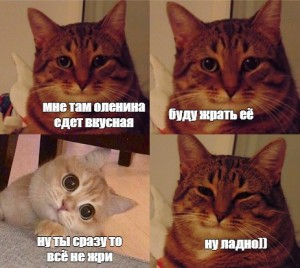 Create meme: meme cat , the meme with the cat and the cat, cat meme